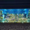 沖縄の新スポット DMMかりゆし水族館レビュー