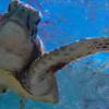 日本で一番ウミガメに逢える島 波照間島
